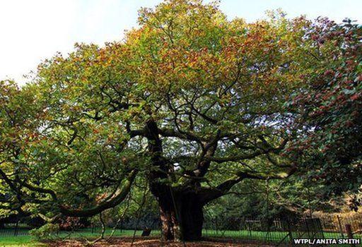 Allerton Oak, Merseyside