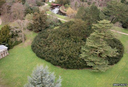 Shugborough Yew, Staffordshire