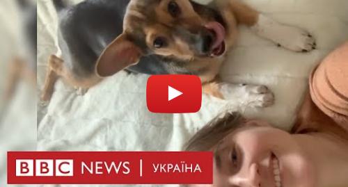 Youtube допис, автор: BBC News Україна: Як собаки знайшли дім і як втратили його через Covid-19