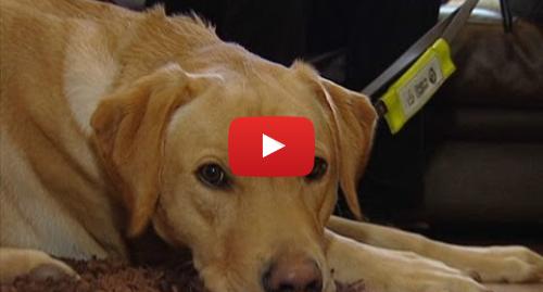 Publicación de Youtube por BBC News Mundo: Los perros que trabajan con personas con demencia