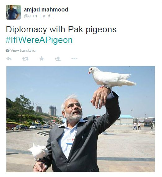 The Indian Prime Minister Narendra Modi is pictured in this pigeon meme