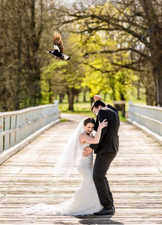 The bride and groom duck as the magpie narrowly avoids their heads
