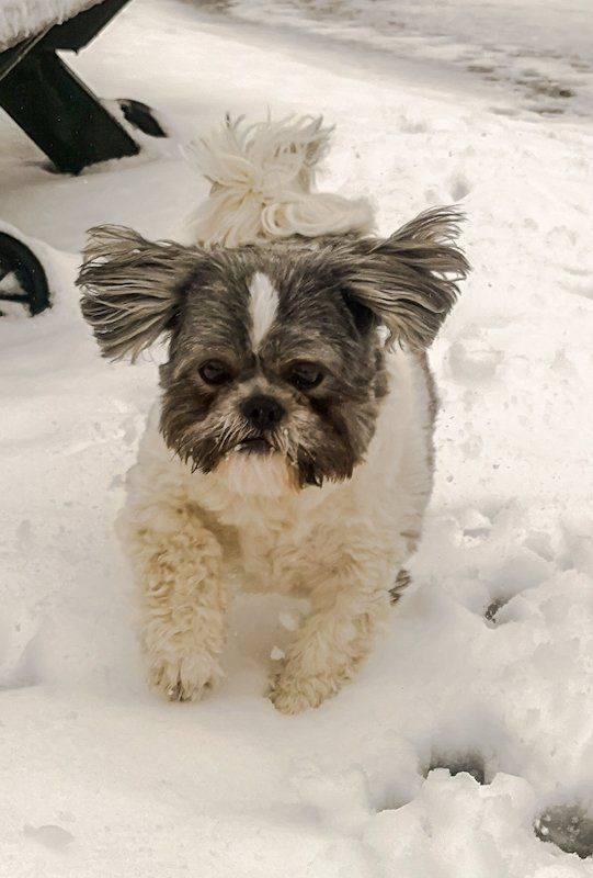 Dog runs through snow