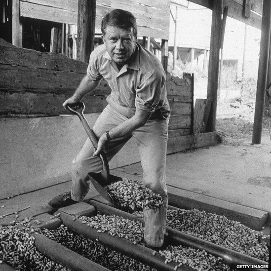 American politician Jimmy Carter looks up while shovelling peanuts on a peanut farm, 1970s.