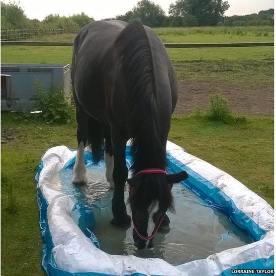 Horse in padding pool