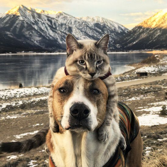 Cat lying on top of dog's head in front of mountain landscape