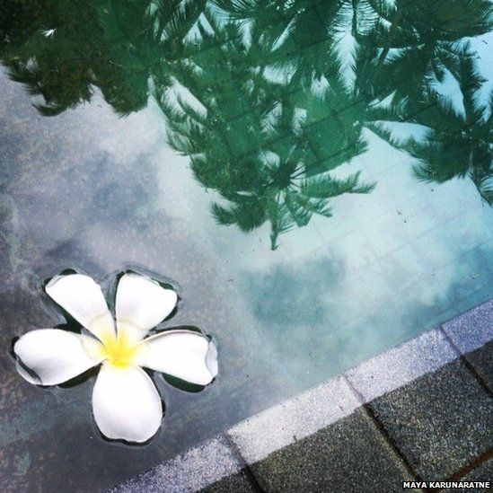 The reflection of island palms. Galle, Sri Lanka
