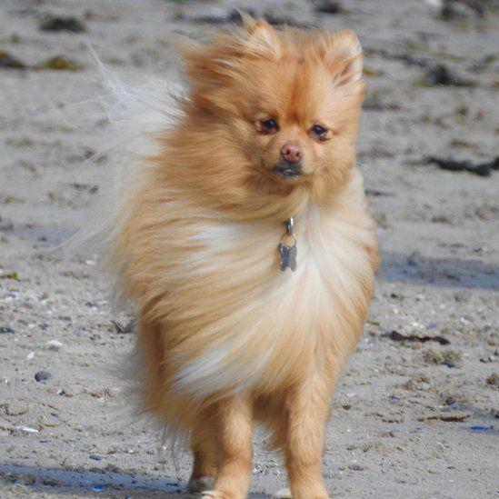 windswept dog on Belfast Lough via Danny McGuigan