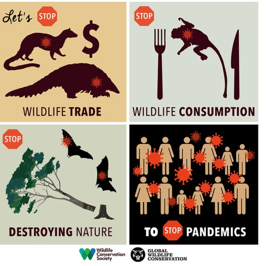 The Wildlife Conservation Society is calling for a ban on wildlife consumption