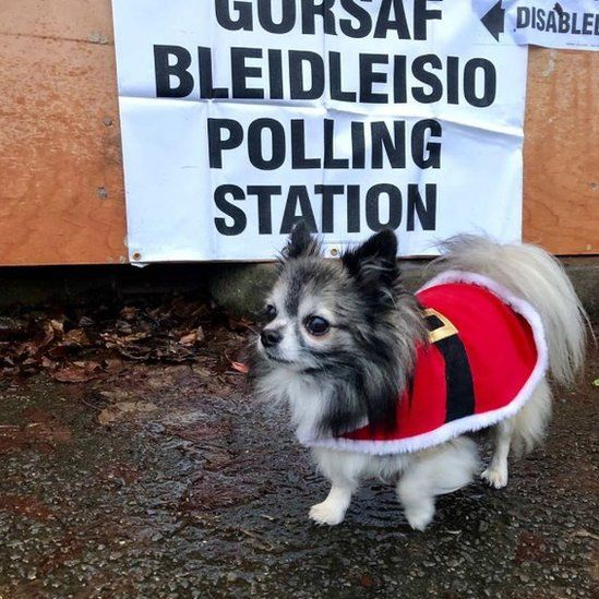 Luca braves the cold in Cardiff. Luckily he's got his Santa coat on while he waits for his owner Hannah at a polling station in Cardiff