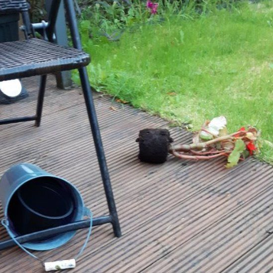 potted plant strewn across decking