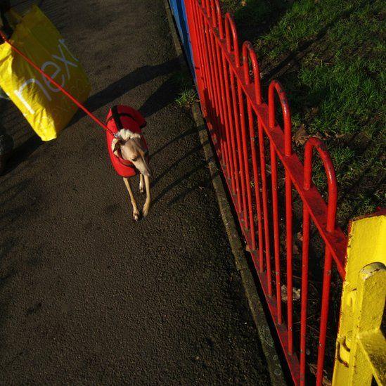 Dog wearing red coat