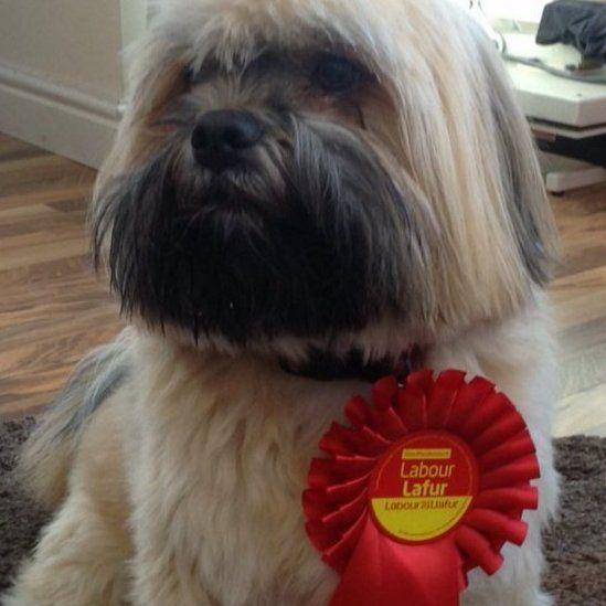 Mae'r ci yma yn edrych fel ei fod wedi hen arfer bod mewn grym // This dog appears to be familiar with being in charge