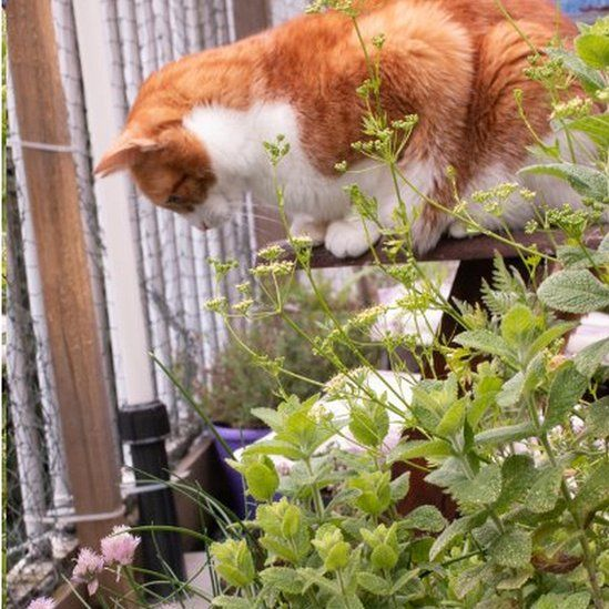 Cat Ragnar admires the garden