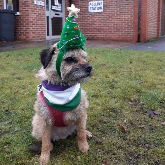 Heidi the border terrier makes her best impression of a Christmas tree outside a polling station in Prestwich, Greater Manchester