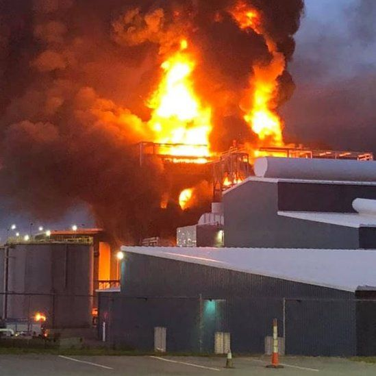 Flames rise from the plant