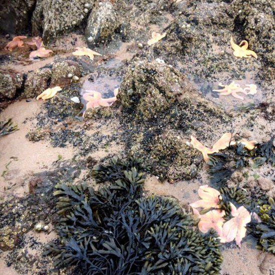 Starfish at Rosemarkie beach