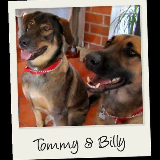 Dr Polsner's dogs Tommy and Billy