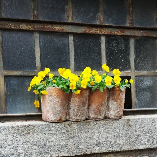 Yellow flowers in Italy
