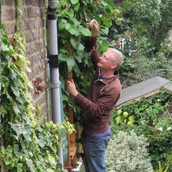 Mark Ridsdill-Smith up a ladder harvesting runner beans