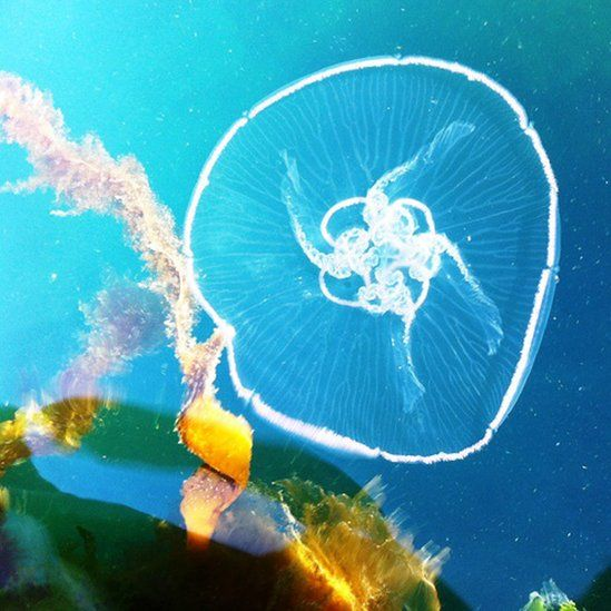 Jelly fish in water