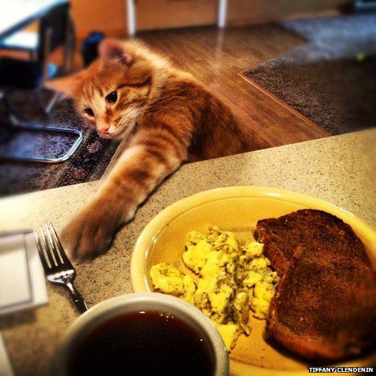 Cat at breakfast