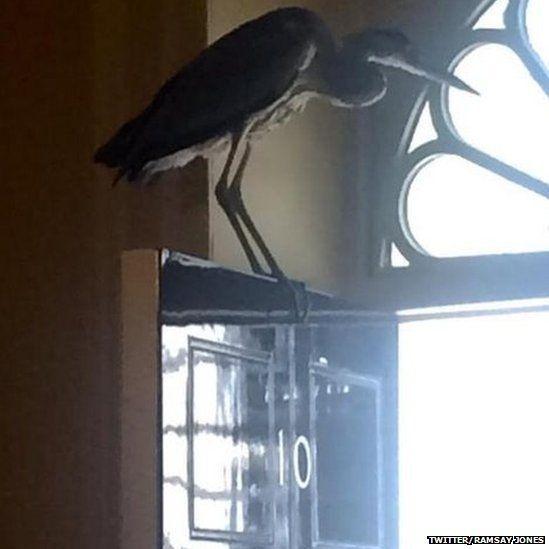 Heron at Downing Street