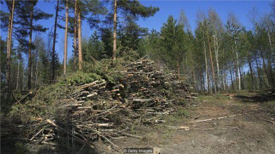 新種植的樹木需要數年的時間才能吸收燃燒木材釋放出的等量的碳。