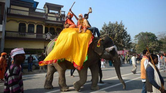 Индия, слон