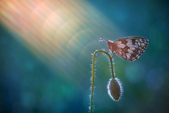 Mariposa descansa en una planta
