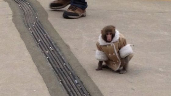 Ikea monkey in a jacket 'part of my family' - BBC News