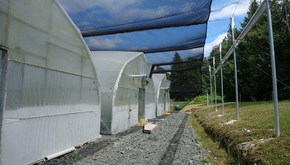 Wasabi greenhouses