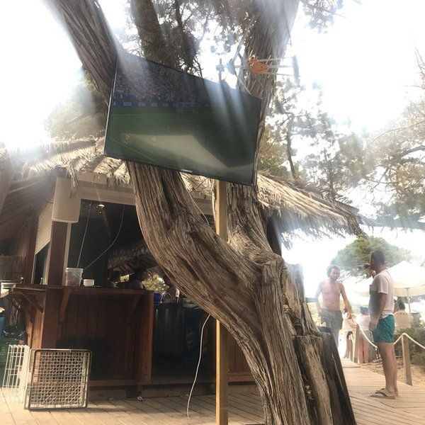 Television mounted on a tree in Ibiza