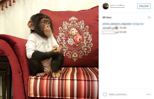 Chimpanzé à venda em rede social