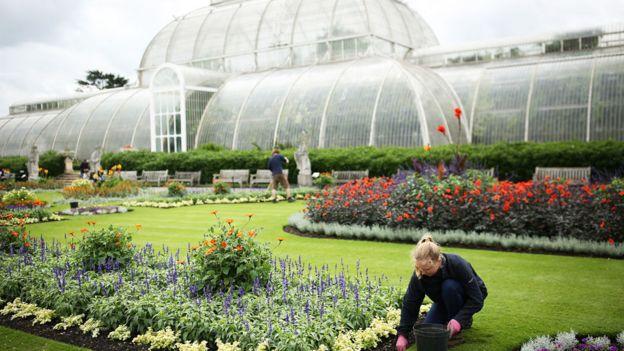 Uno de los grandes invernaderos de vidrio de Kew Gardens, el jardín botánico de Londres