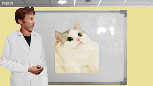 Eagleman mostrando a foto de um gato
