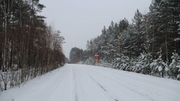Дорога в лісі