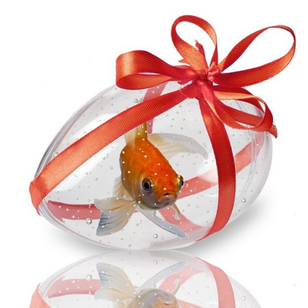 A fishy present: transparent egg shaped fish tank, with a red fish inside, and a red bow