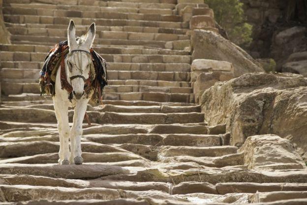 Un burro caminando por las escaleras de las montañas de Petra.