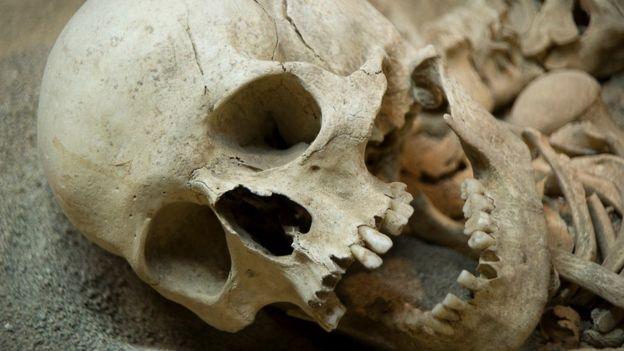 Cráneo de Neandertal