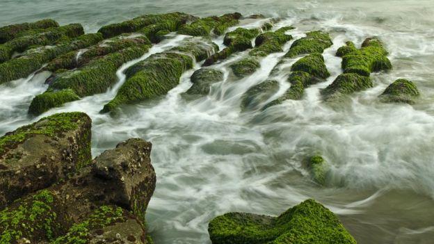 Algas crescendo em rochas em Taiwan