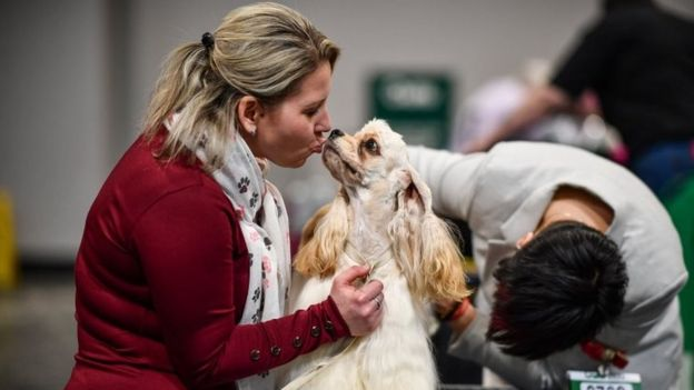 """A woman kisses an American Cocker Spaniel on day 2 of the Cruft""""s dog show at the NEC Arena on March 6, 2020 in Birmingham, England"""