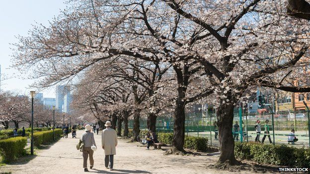 Couple walk under cherry trees in Osaka, Japan