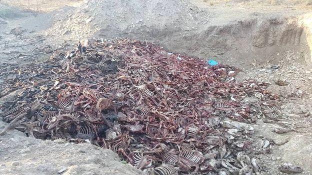 محل دفن استخوان الاغها