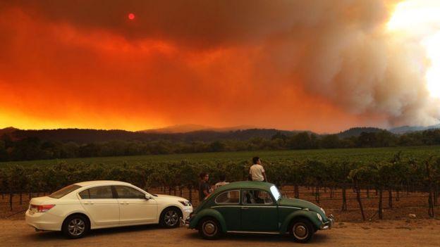 Fires near a vineyard