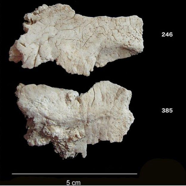 Fragmentos de cráneos encontrados en Stonehenge