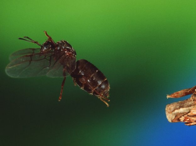 Viewpoint Is There Such A Thing As Flying Ant Day Bbc News