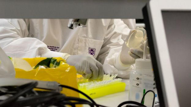 A handout from the University of Queensland shows a lab researcher at work