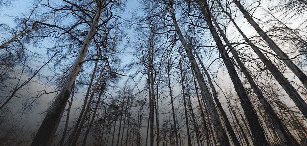 Imagen de los pinos afectados por los altos niveles de radiación tras el accidente de 1986.