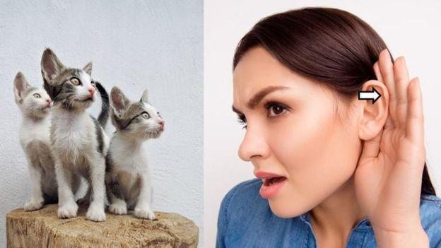Девушка и кошки: разное строение ушей